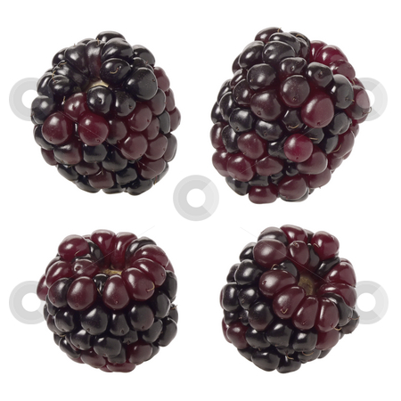 Blackberries stock photo, Blackberries isolated on a white background by Danny Smythe