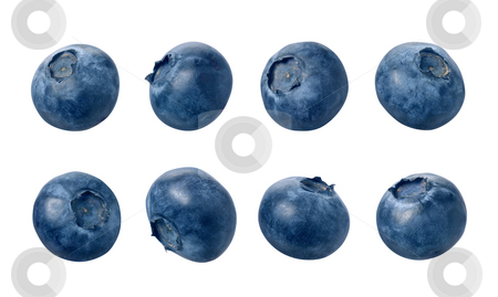 Blueberries stock photo, Blueberries with a clipping path, on a white background by Danny Smythe