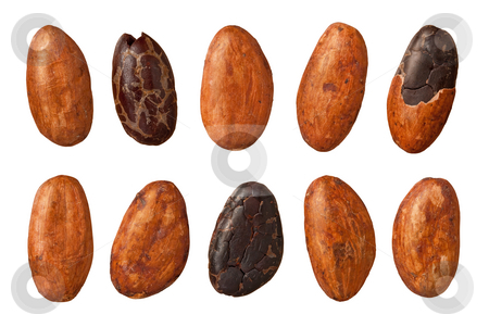 Cocoa Beans stock photo, Cocoa Beans isolated on white with a clipping path by Danny Smythe