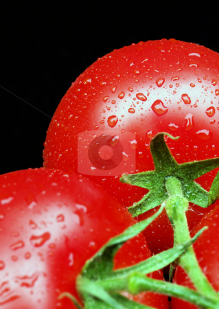 Tomatoes on Vine stock photo, Two ripe tomatoes on vine covered in water droplets. SDOF.       . by Paul Turner