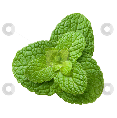 Mint Plant stock photo, Mint Plant isolated on a white background by Danny Smythe