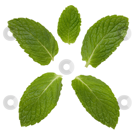 Mint Leaves stock photo, Mint Leaves isolated on a white background by Danny Smythe