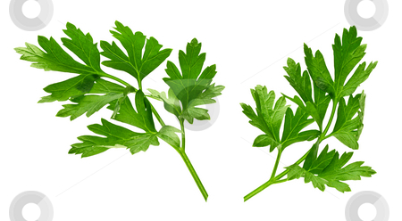 Parsley stock photo, Parsley isolated on a white background by Danny Smythe