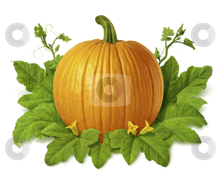 Pumpkin stock photo, Pumpkin isolated on a white background by Danny Smythe