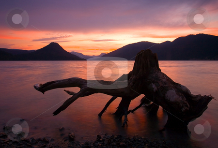 Left Behind stock photo, A gnarled Stump exposed by the rising waters of Rimrock LAke at sunset by Mike Dawson
