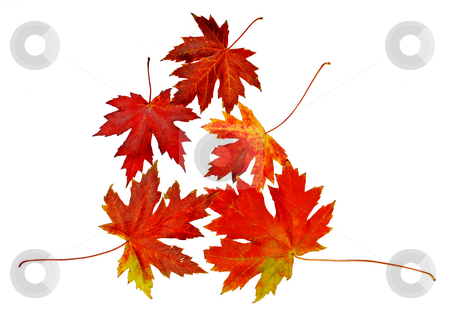 Autumn leaves stock photo, Autumn red and yellow leaves isolated over white by Julija Sapic