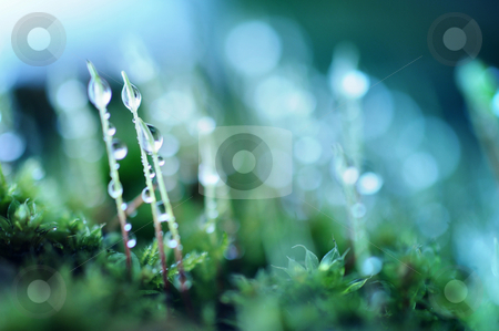Mos stock photo, Moss and dew by Angelique Brunas