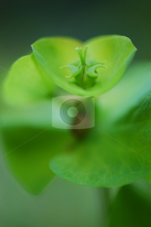 Flower stock photo, Nature by Angelique Brunas
