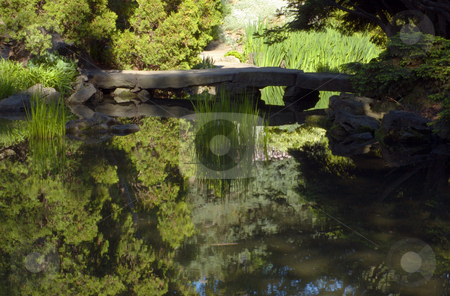 Pond stock photo, Trees and grass on pond shore by Pavel Cheiko
