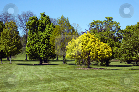Trees stock photo, Trees on green grass lawn. by Pavel Cheiko