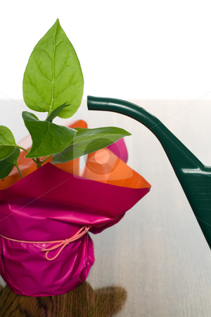 Plant and Watering Can stock photo, Closeup view of a green plant and a watering can by Richard Nelson