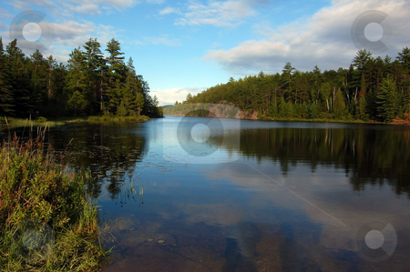 Lake stock photo, Lake in sunny pine forest in Algonquin Park by Pavel Cheiko