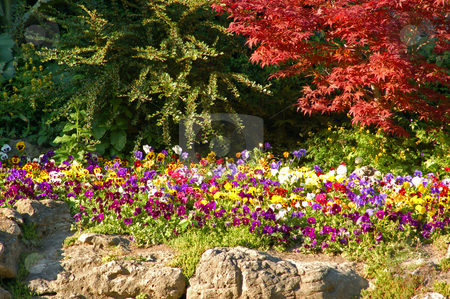 Park stock photo, Colorful flowers and bushes in sunset light by Pavel Cheiko