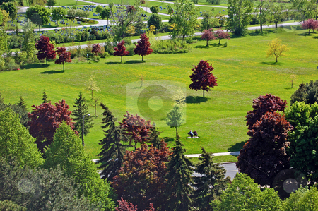 Park stock photo, Landscape - Small park and grass field with small flowers by Pavel Cheiko