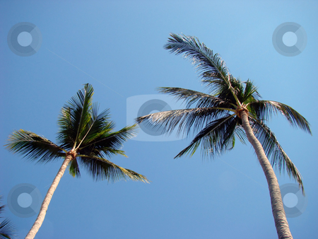 Palm trees stock photo, Resort. Palm trees on the Pacific coast of Mexico. by Fernando Barozza