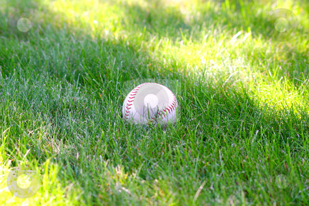 Baseball stock photo, Closeup of a baseball in the grass by Maria OBrien