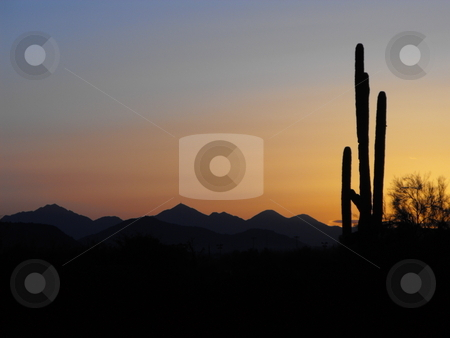 Early morning on the desert stock photo, A saguaro cactus stands tall in silhouette against an orange and  pink tinted sky with mountains for a backdrop. by Dennis Thomsen