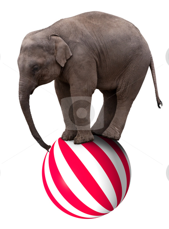 Baby elephant on ball stock photo, A baby circus elephant balancing on a big ball by Norma Cornes