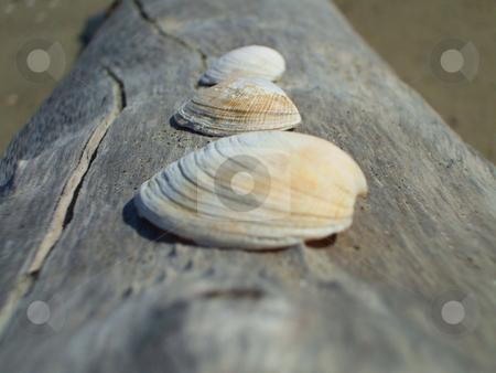 Seashells stock photo,  by Michael Felix