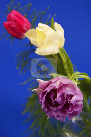 Flower stock photo, Bouquet of colourful tulips made on blue background by Jolanta Dabrowska