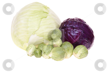 Cabbages stock photo, Variable types of cabbages isolated on white background by Jolanta Dabrowska