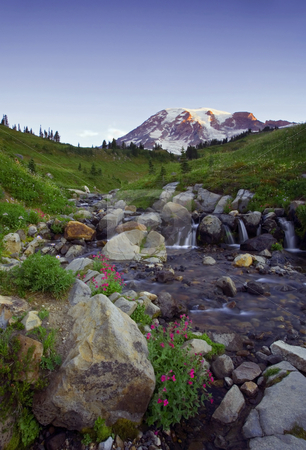 Sunrise Cascade stock photo, First Light on Mt. Rainier as a small creek flows by rock and wildflowers down its slopes. by Mike Dawson