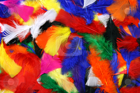 Multicolor feathers stock photo, Multicolor feathers spread out for a background by Laurent Renault
