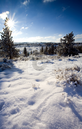 Fresh Winter Blanket stock photo, A fresh winter snow and heavy frost blanket the top of Tieton Ridge early one December Morning by Mike Dawson