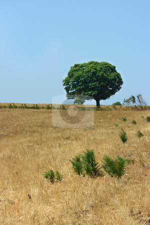 One green tree stock photo, One green tree on a yellow field by Natalia Macheda