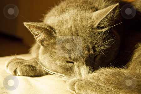 Sleeping cat stock photo, Cat, sleeping comfortably in warm light by Chris Alleaume