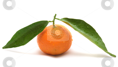 Tangerine with two leaves stock photo, Tangerine with two leaves isolated on white by Natalia Macheda