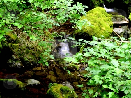 Forest waterfall stock photo, Cascasing waterfall in the forest by Jill Reid