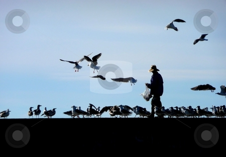 Man feeding seagulls stock photo, Silhouette of man feeding seabirds on pier by Jill Reid