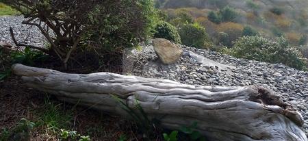 Driftwood log on grassy hillside stock photo, Close-up view of a driftwood log on a grassy and rocky hillside by Jill Reid