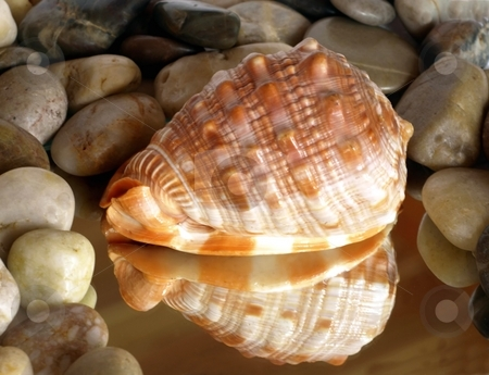 Colorful seashell reflection with zen pebbles stock photo, A patterned colorful seashell is reflected on a mirror, surrounded by zen pebbles by Jill Reid