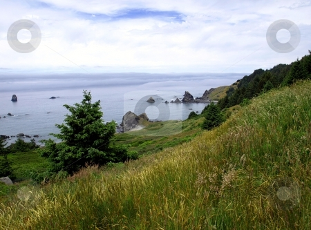 Grassy hillside and fog bank stock photo, View from a green grassy hillside over the ocean while a fog bank rolls in by Jill Reid