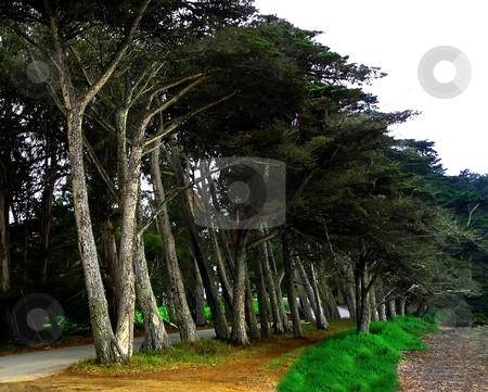 Line of trees along the coast stock photo, A line of trees along the coast by Jill Reid