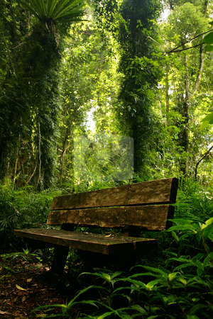 A quiet retreat stock photo, An old rustic bench seat in an over grown forest by Angus Benham