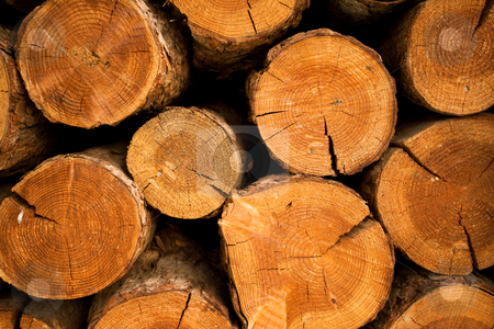 Log pile stock photo, Section detail of a pile of firewood by Angus Benham