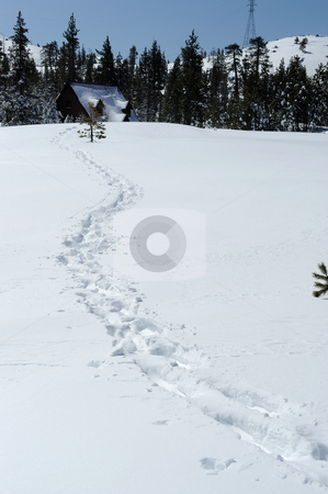 Trail Back To The Cabin stock photo, Snowshoe tracks in fresh snow leading back to the cabin in the countryside. by Lynn Bendickson