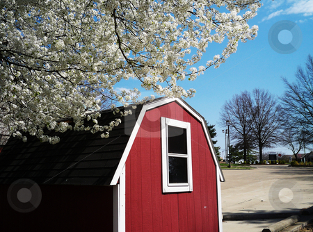 Red Storage Shed stock photo, Red storage shed in the style of a barn with a blooming pear tree in foreground by Sandra Fann