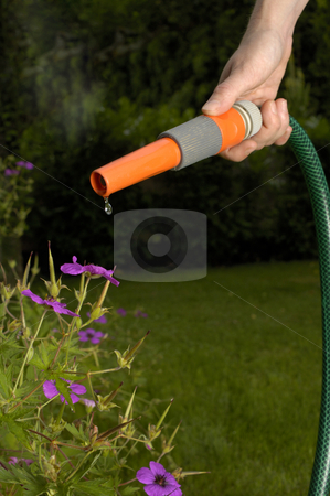 Hosepipe ban stock photo, Drought! A hosepipe with just a drip of water coming out of the nozzle. Space for text on the datk background, framed by the pipe. by Alistair Scott
