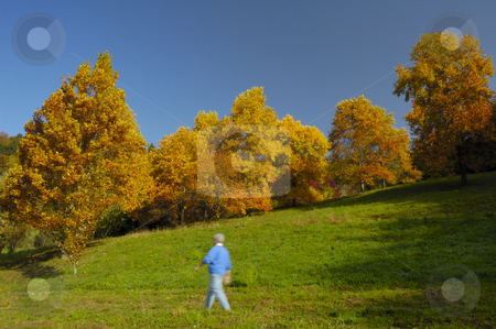 Walk through the woods in autumn stock photo, A man walks through open woodland in autumn. Motion blur on the man. by Alistair Scott