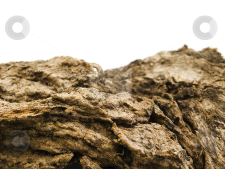 Bark Background with copy space stock photo, Bark background with copy space on white by John Teeter