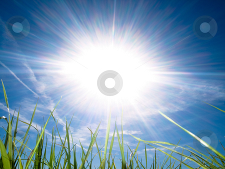 Beautiful fresh grass against sun at spring stock photo, Beautiful fresh grass against sun at spring with blue sky and some clouds by Laurent Dambies