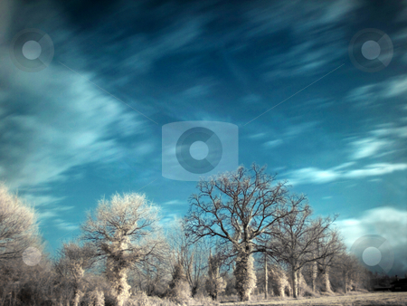 Infrared landscape stock photo, Infrared picture of trees in countryside by Laurent Dambies