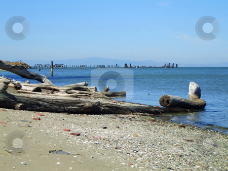Driftwood stock photo,  by Michael Felix