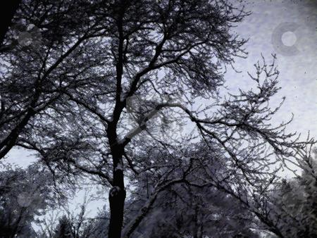 Winter Trees Digital Art stock photo, Winter Trees on Snowy Day, Digital Art by Dazz Lee Photography