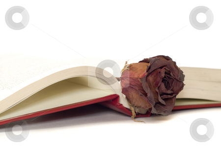 Romantic Book stock photo, A romantic book lying open with a dried rose resting in the middle by Richard Nelson