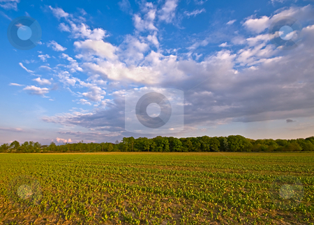 Agriculture farm landscape stock photo, Agriculture farm landscape with clouds in the afternoon by Karin Claus